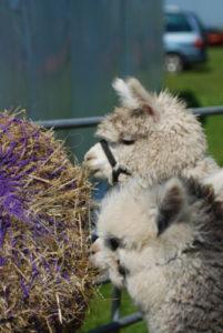 Longthorns Farm Weddings Dorset
