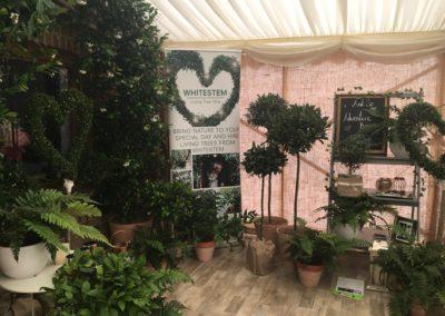 Living plants Dorset
