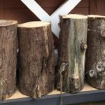 Log Hire Dorset